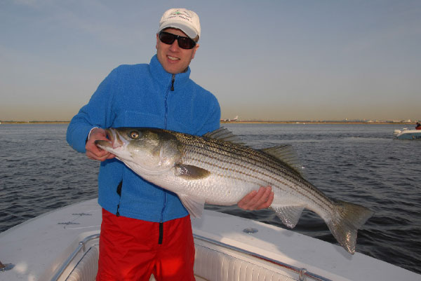 Christmas came early for this striped bass angler