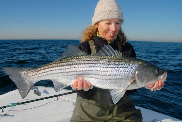 Large, blue-backed fly patterns and lures will be the ticket to scoring with herring-crazed stripers
