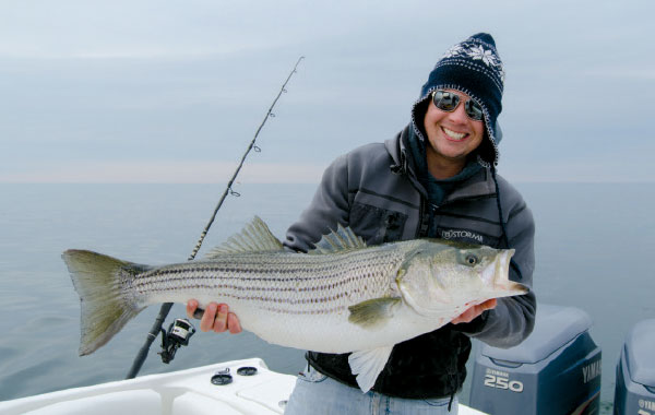 This fat, late-fall striper smacked a Mann's Stretch  25 off Atlantic City.