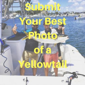 Submit Your Best Photo of a Yellowtail!