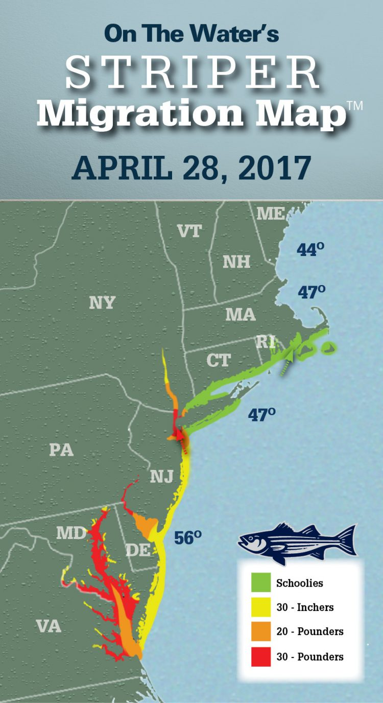 Striper migration map april 28 2017 new sport fishing for Upper chesapeake bay fishing report