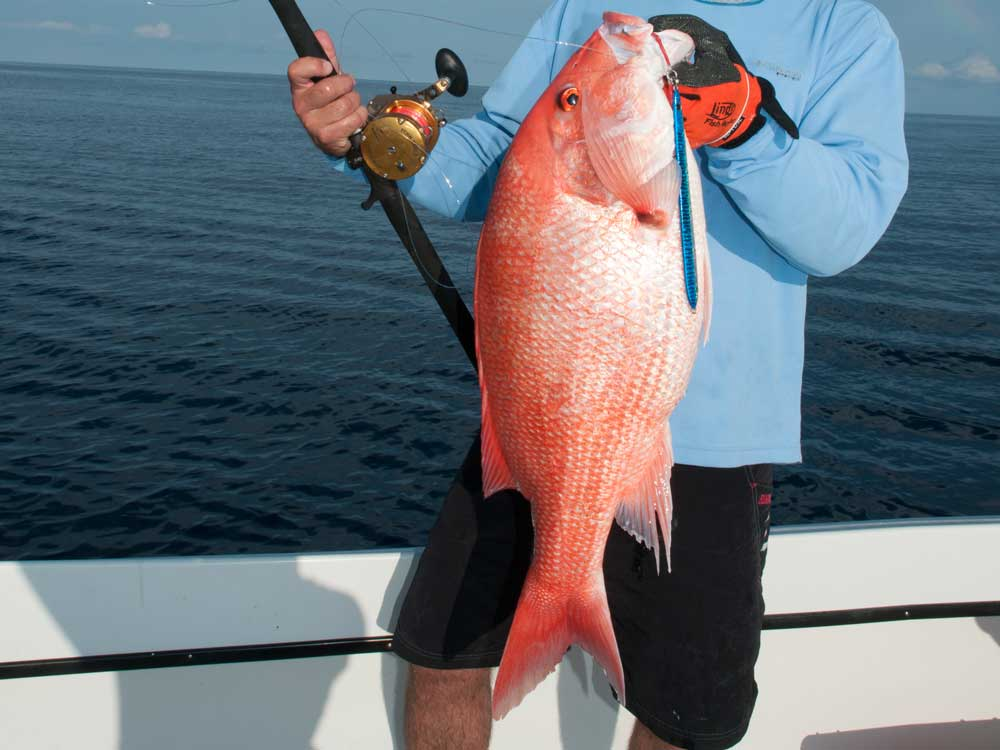 Gulf red snapper season in florida set for 78 days new for Red snapper fishing