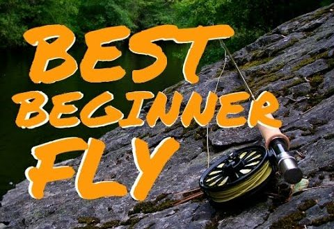Best beginner fly fishing rod outfit new sport fishing for Best fishing pole for beginners