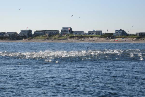 The water is alive with bluefish blitzing a school of peanut bunker off East Matunuck State Beach.