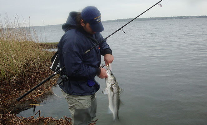 When the ocean-run stripers arrive this season, do what they do: dodge the crowds on the jetties and head for the back bays and estuaries.