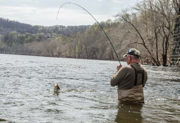 Keeping your dart near the bottom is key to catching shad.