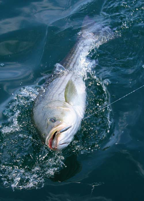Thin diamond jigs sink quickly and imitate sand eels, juvenile herring, and other slender baitfish.