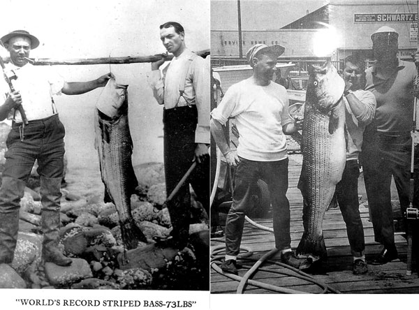 two Charlies and two 73-pound stripers