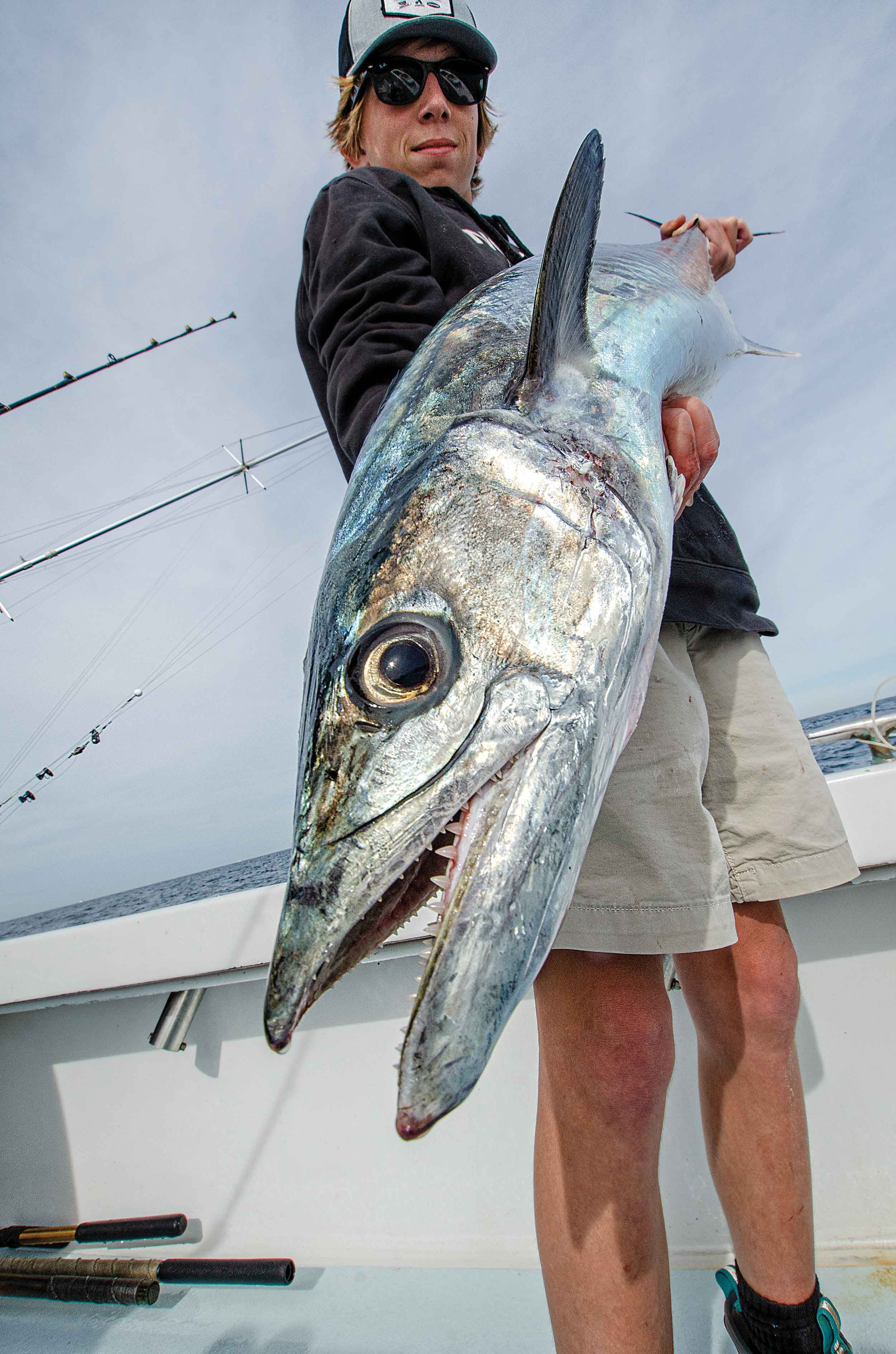 Formidable teeth allow king mackerel to kill or injure prey during high-speed attacks.
