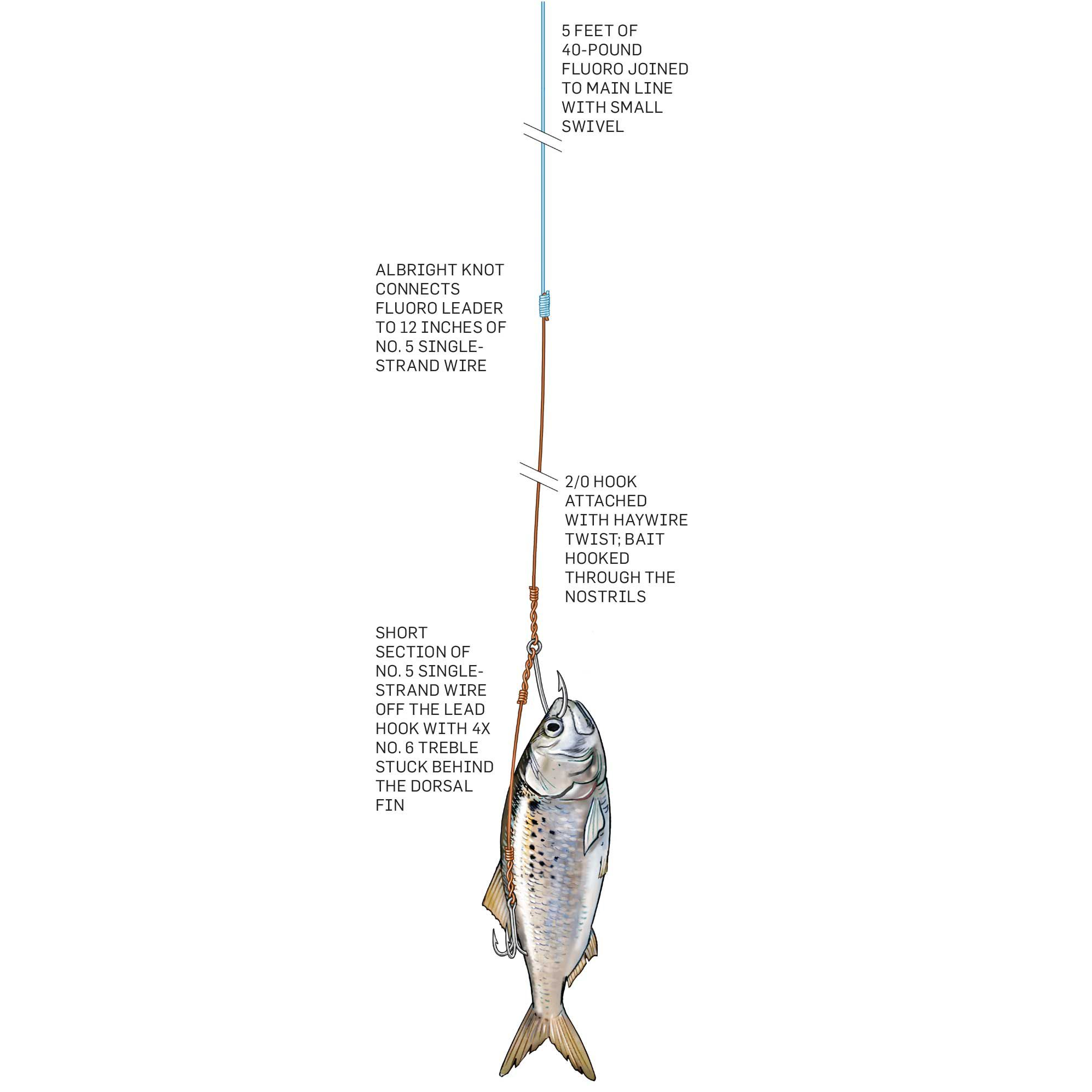 Sharp dentures on king mackerel call for wire to prevent cutoffs. The fish's equally sharp vision requires keeping wire leaders short and using No. 5 single-strand wire to minimize the potential for detection and rejection.