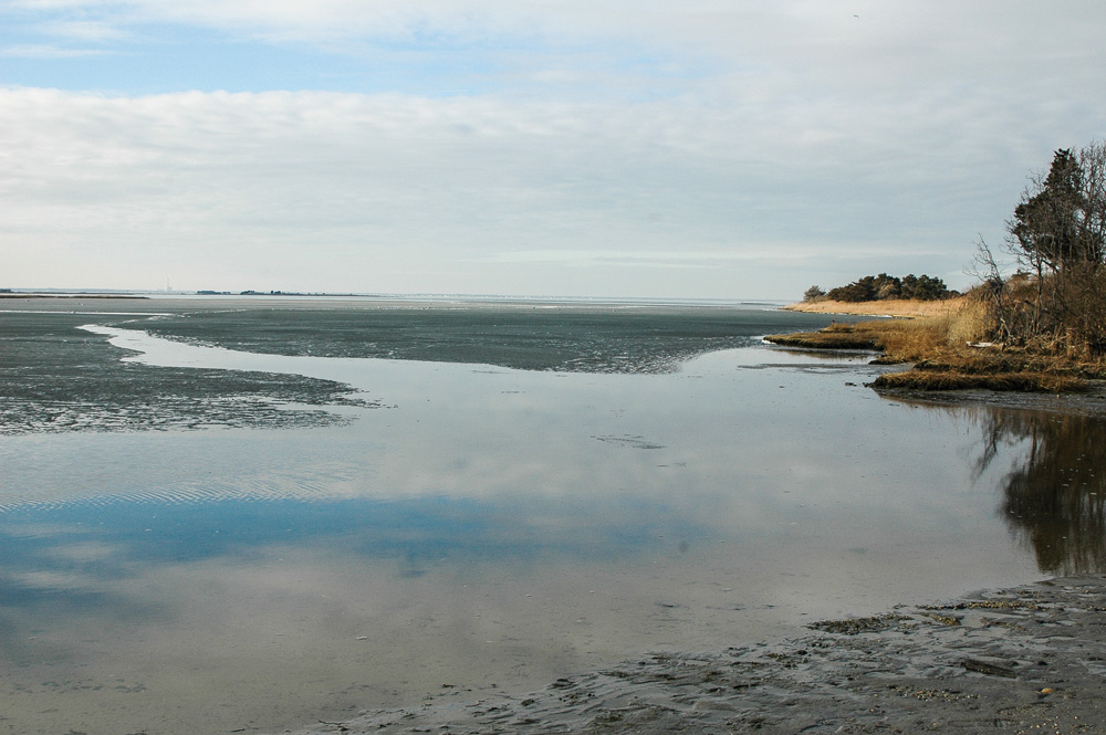 estuary at low tide