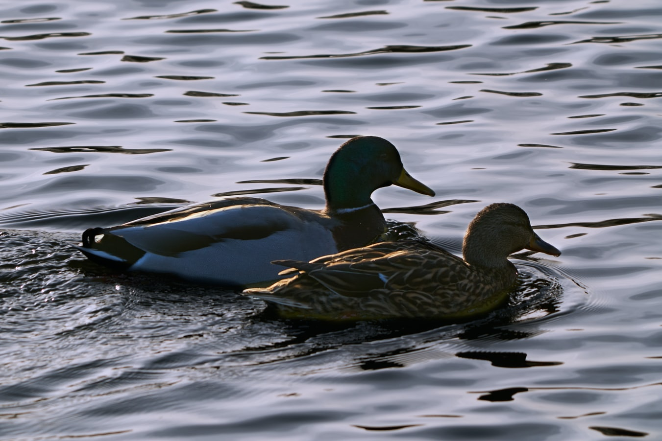 tips for waterfowl shooting success Payne Outdoors