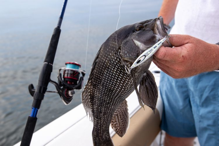 Jigging with lightweight gear has become a popular and fun way to fish for black sea bass.