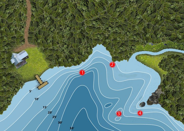 The northern shoreline of a pond or lake receives more sunlight, making it a good place to start your search for smallmouth bass.