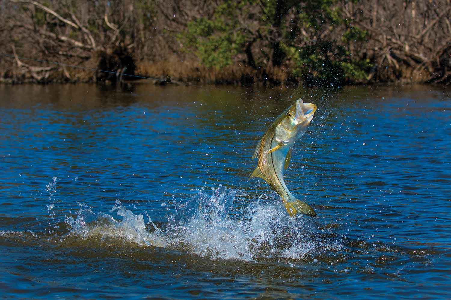 Snook ambush tactics depend heavily on submerged cover.